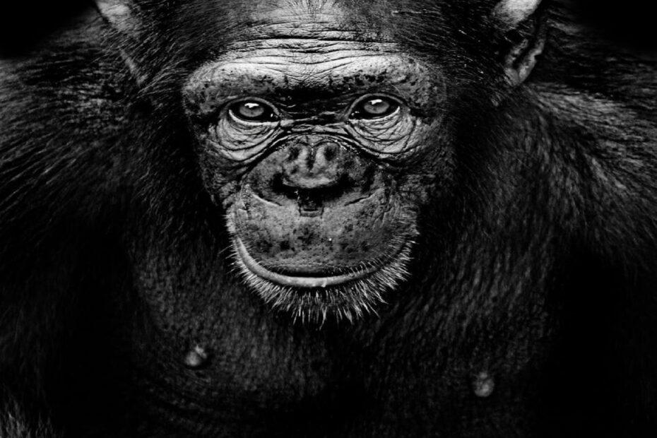 2 Blog - How do you tame a human 4(1)