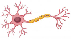 Nerve cells that enable our interaction with our environment - Daniel Kish
