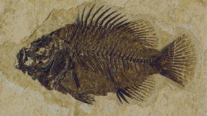 consider what happened 50 million years ago with a small fish swimming near the bottom of the Indian Ocean and he dies and slowly falls to the bottom only to be covered in sand.
