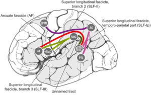 The evolutionary neuroscience of musical beat perception: the Action Simulation for Auditory Prediction (ASAP) hypothesis - TDN Blog