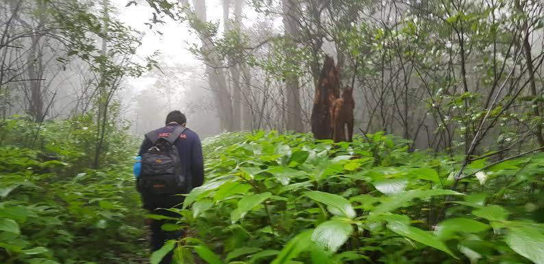 9 characteristics of people having naturalist intelligence - Naturalist - TDN Blog