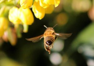 How does spatial cognition of animals help them in navigation? - Honey bees navigate according to a map like spatial memory.