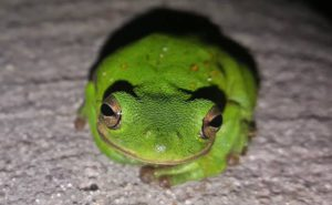 Are we the only mathematically intelligent specie on this earth? | Multiple Intelligences | Frog