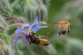 Are we the only mathematically intelligent specie on this earth? | Multiple Intelligences | Honey Bee